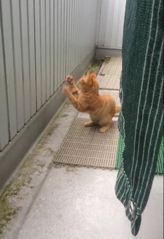 可爱猫咪看到这一幕后惊喜不已
