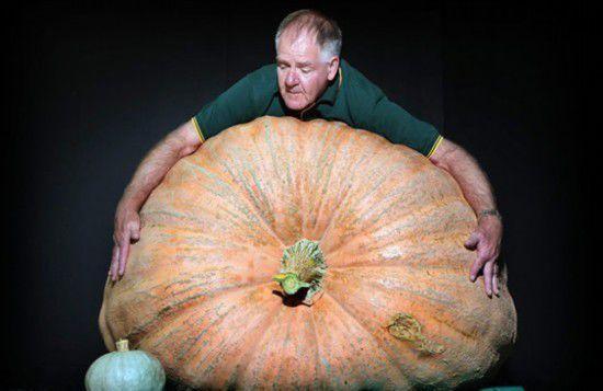 美国小学老师种出866公斤