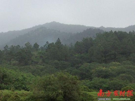 广东阳江官员花200万承包万亩山林 价值近亿_
