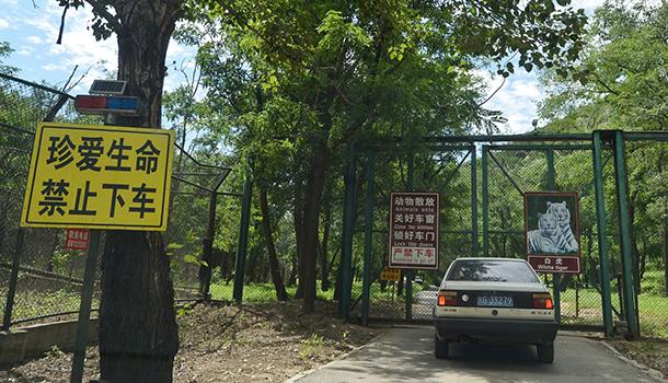 发生老虎伤人事件后,八达岭野生动物园的东北虎园一直处于关闭状态。今天上午,《法制晚报》记者探访发现,东北虎园经过改造后已重新开放。   记者注意到,东北虎园的入口处在原有一块警示牌的基础上有增加了一块,上面写着严禁下车,园区内还设置了电网。上午,在事件中伤人的三只老虎已从笼子里放了出来,正在园区内活动。   今年7月23日,八达岭野生动物园发生女子在猛兽区下车被老虎袭击,致一死一伤事件,该园关门暂停营业。8月24日下午,事件调查结果公布。次日,八达岭野生动物园恢复营业。9月,猛兽区经架设电网等安全