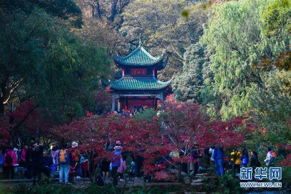 麓山枫叶红