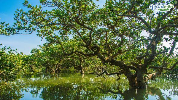 广西湿地,梦里水乡