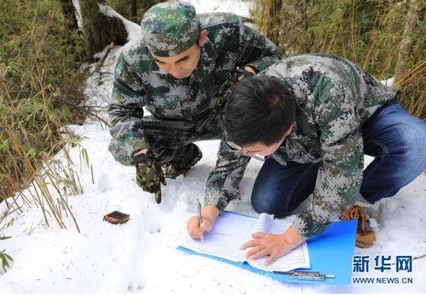 森林巡护员:野生大熊猫栖息地守护者