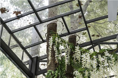 """树木穿越屋顶 武汉高校现风情""""树林餐厅"""""""