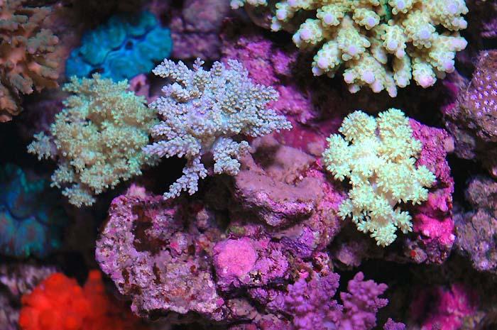 珊瑚—色彩斑斓的世界