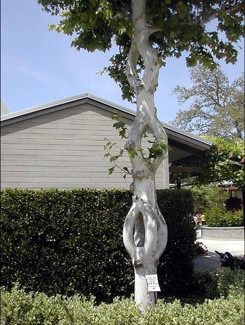 你肯定没见过——奇树怪树集锦 - 美女 - 美女的博客