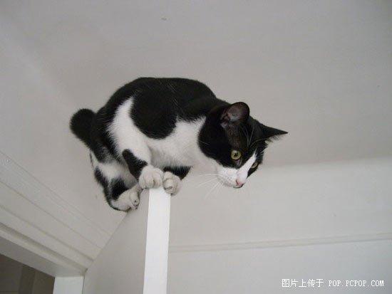 巨会功夫的猫咪!好可爱啊