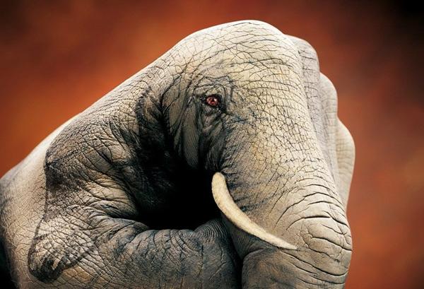 相关阅读   艺术家手上的动物世界!膜拜   手上的动物世界 高清图片