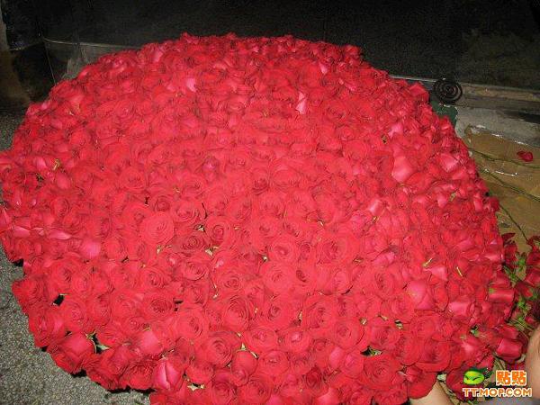 999朵玫瑰花