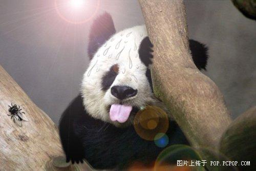 超囧超可爱的ps版大熊猫