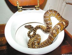 六旬老人如厕遭蛇咬下体 忍住剧痛扯开蛇就医