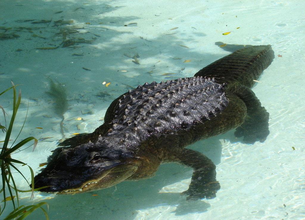 《动物世界》,看到电视里的鳄鱼