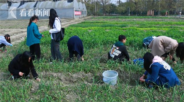 高校开设种田必修课,学生吐槽男女分开干活