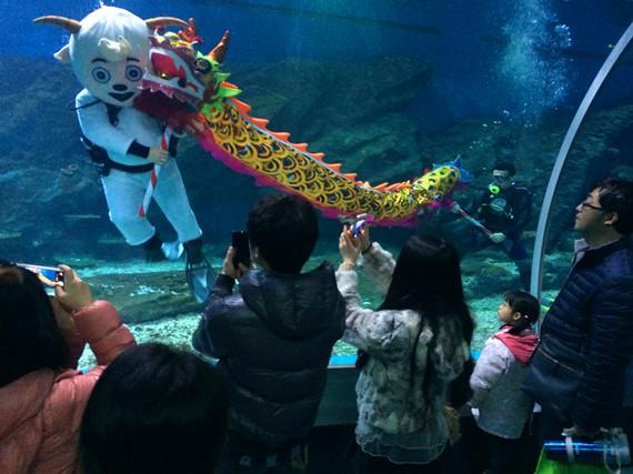 潜水舞龙的喜羊羊吸引了大批游客 长江网讯(记者邓小龙 通讯员易兰静)喜羊羊通常出现在电视上,现在已经是家喻户晓的卡通形象。可是你看过会潜水的喜羊羊吗?日前,在武汉海昌极地海洋世界里,一只由工作人员扮成的喜羊羊穿上潜水服,在鱼群的环绕下舞起了祥龙,让众多游客眼前一亮。 妈妈你看,喜羊羊在水里,还在舞龙呢!2月16日上午,在武汉海昌极地海洋世界的海底隧道里,7岁男孩苗苗被这只独特的喜羊羊吸引,一个劲的吵着要让妈妈给他拍照留念。 据悉,武汉海昌极地海洋世界新春期间活动纷呈,喜羊羊舞祥龙就