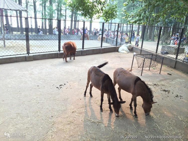 武汉动物园 首次请猴子吃月饼
