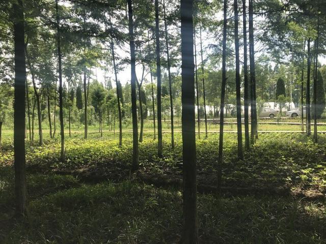 东西湖新洲新增森林小游园,武汉坐拥中国城市森林第一环