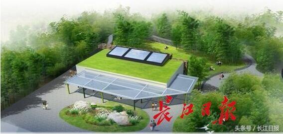 武汉大熊猫伟伟要搬新家啦!后院就有3个半模板组织设计施工篮球