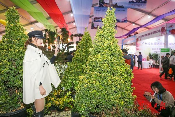 意外!武汉花木公司订单,明年这种树需求量最大