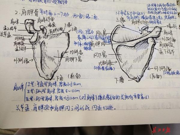 武科大医学生手绘人体解剖图,画得简直跟教科书一样