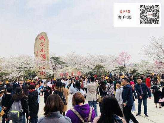 花开正盛,东湖樱花园游客已超5万人