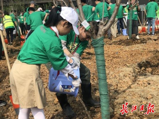 明年春,到长江新城江滩公园去看樱花