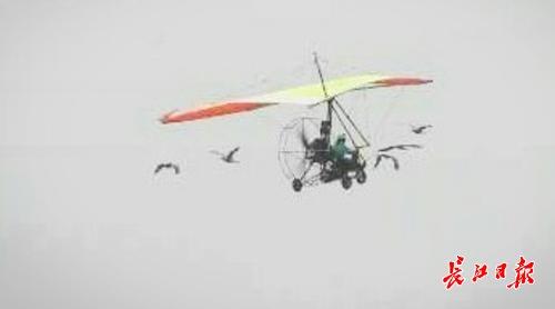 """国内首次""""鸟类伴飞""""在汉公演,15只飞鸟与动力三角翼编队飞翔"""
