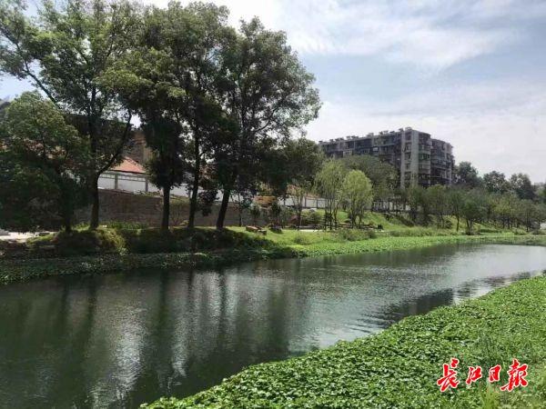 河里有鱼河边有绿,巡司河武昌段已是今非昔比