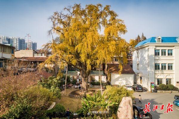 汉阳树最佳观赏期到了丨图集
