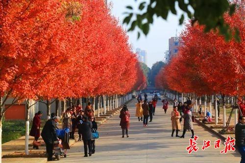 未来三天升温明显,武汉比昆明还暖和