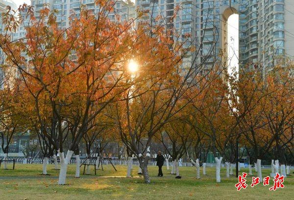 上海到阜阳的火车时刻表_春赏繁花秋冬观叶,樱花树今年第二赏