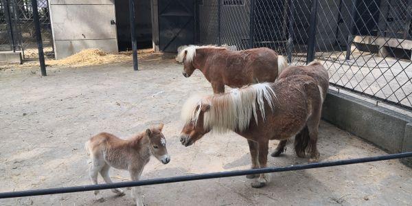 """22日,武汉动物园的动物们要""""复工""""了!3个月不见,小麋鹿小矮马等动物宝宝相继出生"""