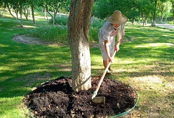 成本低生命周期长生态效益好,乡土植物受重视