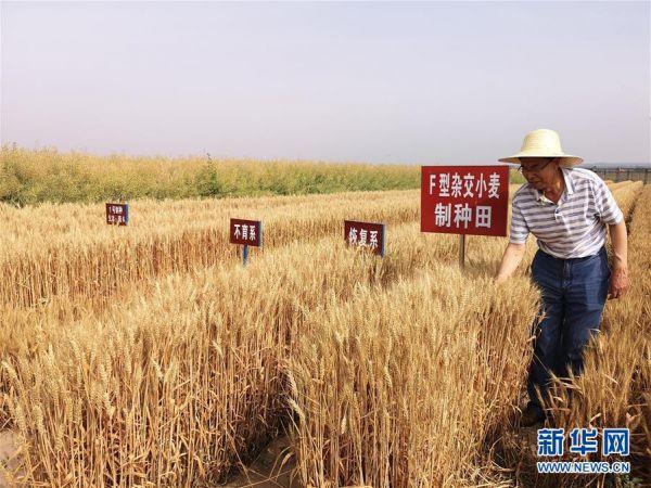 舌尖上的中国,不是舌尖上浪费的中国