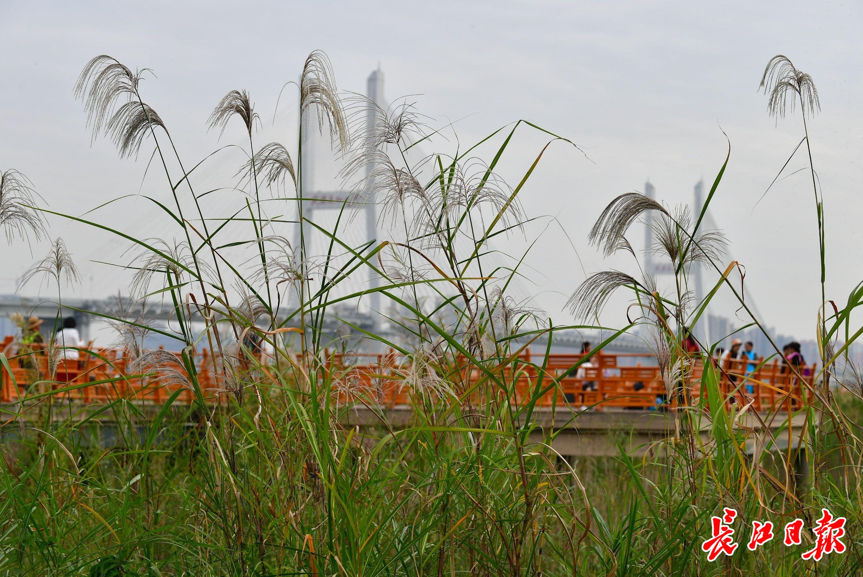郑州市区上周空气质量排名:惠济区第一,中原区垫底