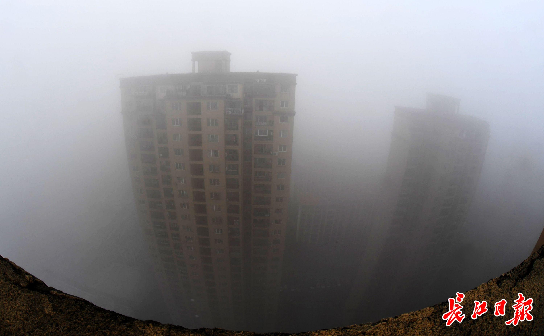 追踪丨你觉得郑州哪些街道落叶最美?官方:将梳理适合保留落叶的景观街