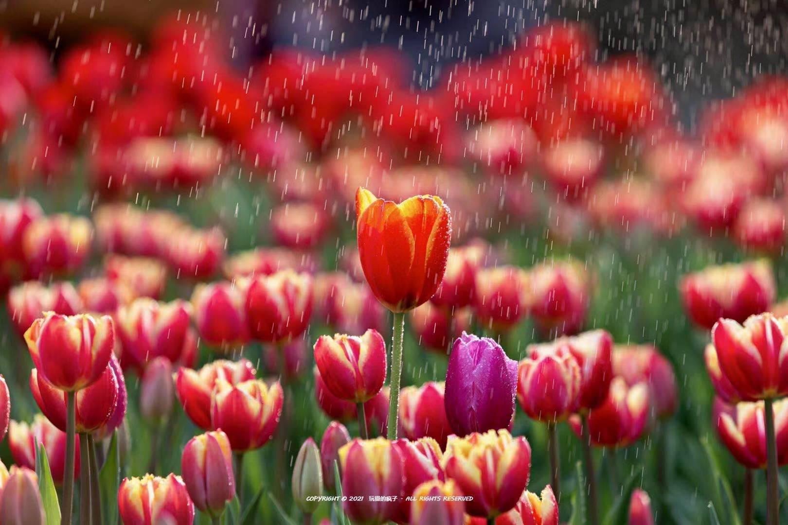 等不及了!全城的花花们带来春的讯息|城市摄
