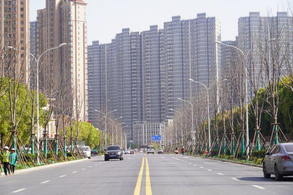 古时种在王庭名园,如今耸立人行道边,武汉有