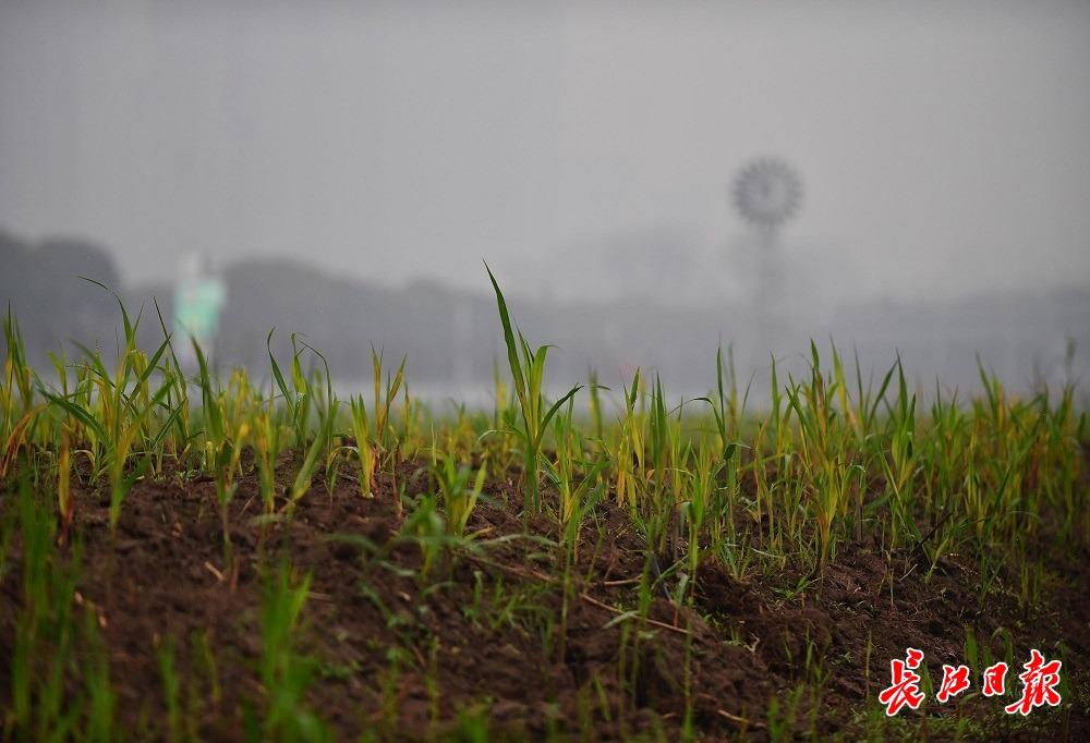 春雨润江滩,蒌蒿满地芦芽短 | 图集