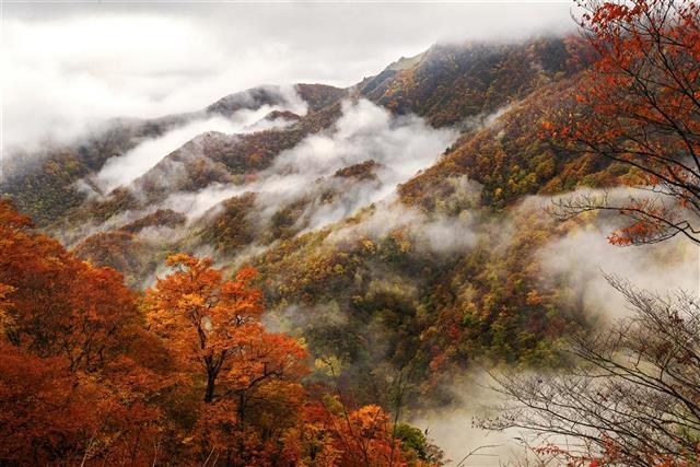 神农架将再创1个5A级景区,助推年游客量3000万人次