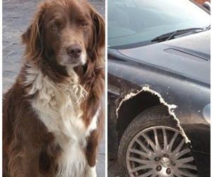宠物狗咬烂阿斯顿马丁车轮拱罩遭人弃养