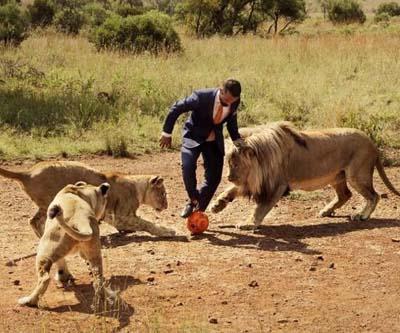 非洲动物园管理员与狮子踢足球