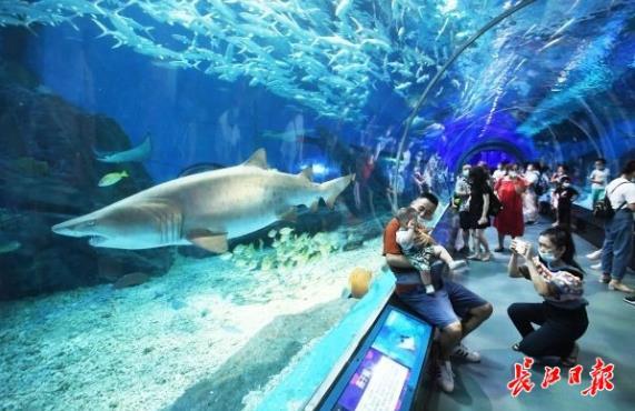 错峰游玩海洋公园