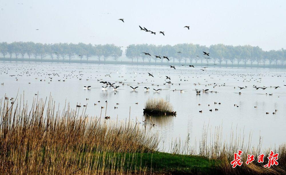 府河湿地,鸟类天堂 | 图集