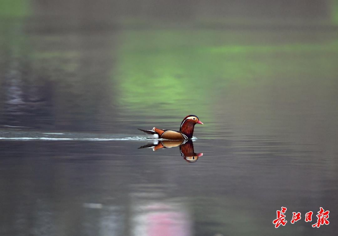 湖北青山绿水间,群鸟遨游 | 图集