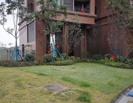 """小区交房前给草坪喷""""绿漆""""?开发商:喷洒的是无害增绿剂"""