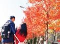 文华学院看红枫