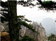 黄山松与笔架山