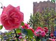 花红绿叶水塔旁