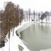 武汉东湖雪中美景