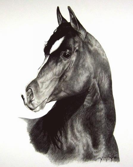 张明哲泰; 动物铅笔画; 铅笔画出超立体世界—j.d.